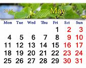 stock photo of alder-tree  - calendar for May of 2015 year with branch alder leaves ready for office life