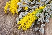 image of mimosa  - yellow French mimosa with catkins on wooden table - JPG