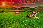 foto of afforestation  - Medieval Italian Town Surrounded by Fields and Firewood at Sunset - JPG