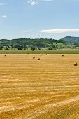 image of hay bale  - Landscape with Many Hay Bales in Italy - JPG