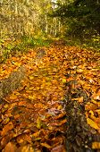 stock photo of serbia  - A lot of fallen leaves along forest mountain road at autumn - JPG
