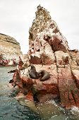 stock photo of sea lion  - sea lion on rocke formation looking at the camera - JPG