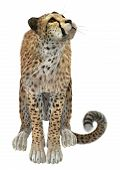 picture of cheetah  - 3D digital render of a sitting cheetah isolated on white background - JPG
