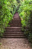 image of staircases  - Brown staircase in the green vegetation  - JPG