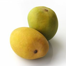 picture of mango  - High resolution image of 2 mangoes - JPG
