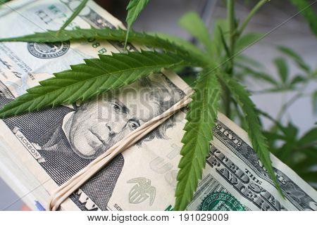 Marijuana With Money