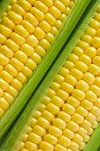 picture of sweet-corn  - Close up view of then corn on cob - JPG