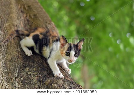 poster of Calico Kitten Cat Catch On Tree, Cute Kitten Cat, Little Kitten Cat, Cute Pussycat, Calico Pussycat,