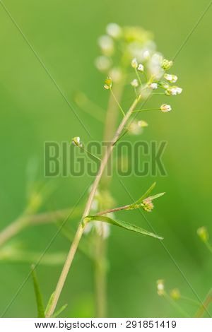 Close Up Of Wild Flowers