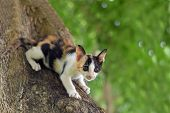 Calico Kitten Cat Catch On Tree, Cute Kitten Cat, Little Kitten Cat, Cute Pussycat, Calico Pussycat, poster