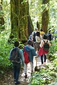 Travelers Traveling On Footpath In Rainforest, Ecotourism In Beautiful Nature Environment In Trail O poster