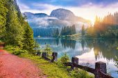 Majestic Summer View Of Mountain Lake Lacul Rosu Or Red Lake Or Killer Lake. Rotten Tree Trunks. Log poster