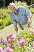 stock photo of senior-citizen  - Senior man in a flower garden - JPG