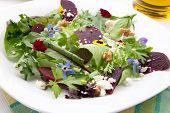 stock photo of baby goat  - Beets with walnuts goat cheese and baby greens organic salad - JPG