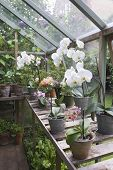 foto of workbench  - Flowering orchid on workbench in greenhouse - JPG