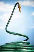 foto of garden snake  - Curled up garden hose rearing up in front of blue sky - JPG