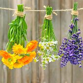 image of bundle  - fresh marigold flowers - JPG