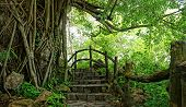 picture of stepping stones  - Amazing scene at Mekong Delta rocky mountain old stone staircase with rock fence tree with large tree trunk abstract roof and big stump the way up to paradise green landscape for Vietnam travel