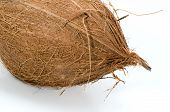 picture of hairy  - Whole hairy coconut isolated on white background - JPG