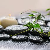 stock photo of tendril  - beautiful spa concept of green twig passionflower with tendril ice and candles on zen basalt stones with dew closeup - JPG