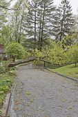 stock photo of tree lined street  - A neighborhood road is blocked by a large oak tree and downed power lines after a spring storm