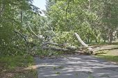 stock photo of fallen  - A road is blocked by a large oak tree that has fallen and crumbled across the road blocking the way