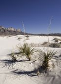 picture of guadalupe  - Salt basin dunes are made of Gypsum grains which are bright - JPG
