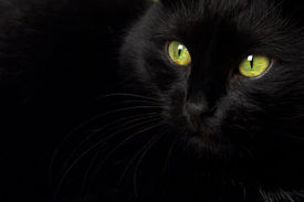 picture of black cat  - A black cat with green eyes - JPG