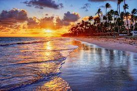 image of inlet  - Brilliant ocean beach sunrise with palm trees - JPG