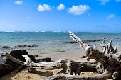stock photo of driftwood  - Driftwood on the sand of a quiet beach - JPG