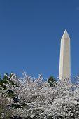 stock photo of obelisk  - The Washington Memorial was built to commemorate George Washington  - JPG