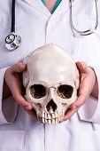 stock photo of skull  - Doctor holding a skull in his hands - JPG