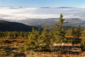 picture of hayfield  - view from Babia Hora to Slovakian capathi mountains - JPG