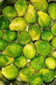 image of brussels sprouts  - brussels sprouts in a cooking pot - JPG