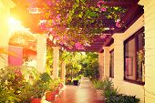 Landscaped terrace of a beautiful big house over sunset. Beauty vintage veranda with flowers. Tropic poster