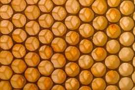 picture of honeycomb  - Close up shot of honeycomb background - JPG