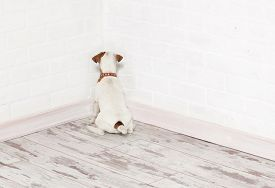 picture of punish  - Dog standing in the corner - JPG