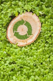 stock photo of disafforestation  - tree stump on the green grass with recycle symbol - JPG