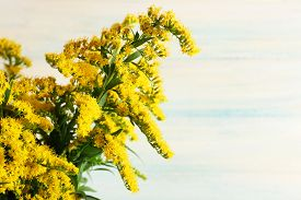 pic of mimosa  - Beautiful mimosa flowers on wooden background - JPG