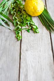 image of sukkoth  - Symbols of jewish fall festival of Sukkot lulav - etrog palm branch myrtle and willow - on old wooden background. ** Note: Shallow depth of field - JPG