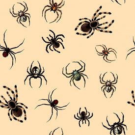 pic of black widow spider  - Seamless pattern with dangerous realistic spiders  - JPG