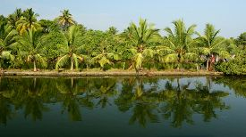 foto of alleppey  - India Coco trees reflection at back waters of Kerala - JPG