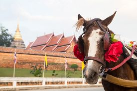 picture of carriage horse  - Horse carriage at temple Phra That Lampang Luang Lampang Thailand - JPG