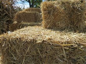 image of hayride  - Hay bales and cornstalks are ready for pumpkins - JPG