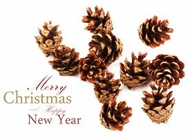 foto of cone  - Set of cones various coniferous trees isolated on white background - JPG