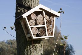 stock photo of cocoon tree  - Solitary bee hotel is a shelter for different kind of insects - JPG