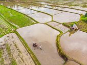 The Rice Fields Are Flooded With Water. Flooded Rice Paddies. Agronomic Methods Of Growing Rice In T poster