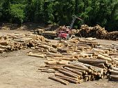 picture of skidder  - Photo overlooking a timber yard while on the train trip - JPG