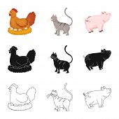 Vector Illustration Of Breeding And Kitchen  Icon. Collection Of Breeding And Organic  Stock Vector  poster