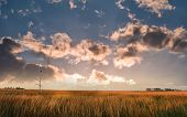 Bald Eagle Gazing Out Over A Grassy Field In A Marsh On The Chesapeake Bay In Maryland St Sunset poster